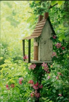 A home for the Chickadee