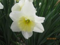 HAPPY BIRTHDAY, CAROL ANN (dukeycash)