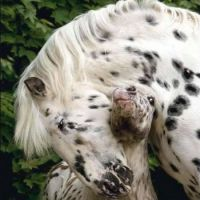 Remember Pippi Longstocking's horse?