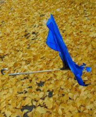 Ginkgo-Herbstlaub und Regenschirm