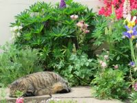 Milly - No one will see me hiding behind this plant ☺