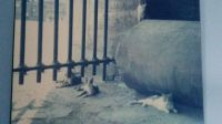 Cats at the Colosseum.