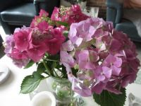 Hydrangea 'bouquet'