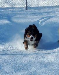 Kadie the snow-plow!