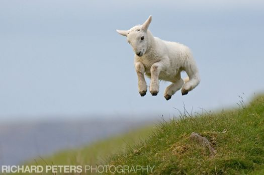 Yippee!!  It's Spring!
