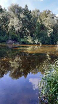 Teich bei Speyer