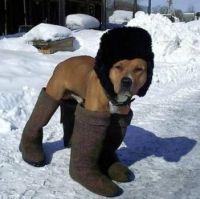Pes v ruské zimě