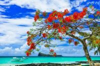 -tropical-paradise-in-Mauritius-island-view-with-turquoise-sea-and-red-flamboyant-tree-