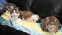 3 cats 2007