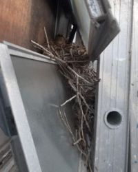 Mockingbird Nest 1