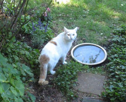 Dorus in his garden