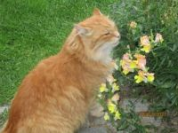 Max examines flowers ☺