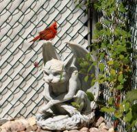 Cardinal likes my gargoyl