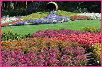A barrel of flowers spread far...