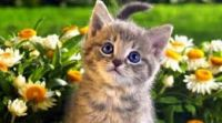 Kitten between flowers
