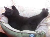 RAVEN MADE A HAMMOCK OUT OF THE CURTAINS