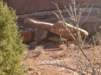 Arches NP #12--more tumbled rock