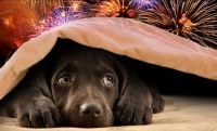 This is what fireworks mean to our fur friends
