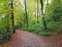 Golden Autumn Pathway