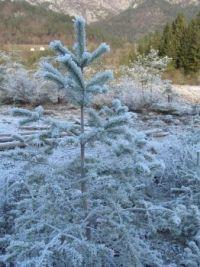 Frost at Tramonti di Sopra, Friuli, Italy