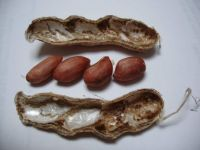 Peanuts, Four In a Pod, how often?