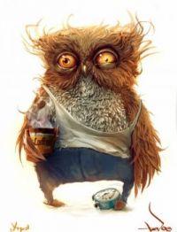 Owl before coffee