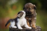 16_Adorable-Puppy-Pictures-that-Will-Make-You-Melt_507959740_Utekhina-Anna