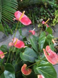 72 Floral