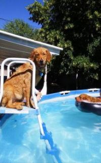 Dog Days of Summer:small
