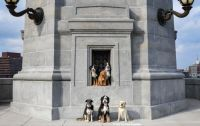 Boston Dogs 2
