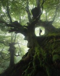 ancient trees in the Basque country