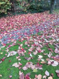 My garden with someone else's leaves :)
