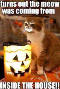 Scary Halloween Cat