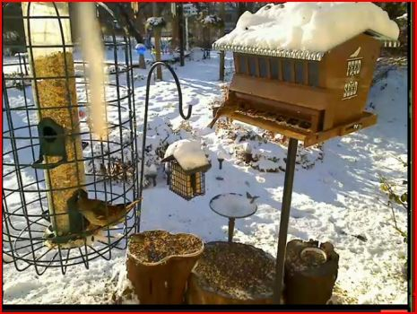 snowy feeders in Kansas 12 21 12