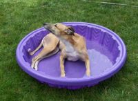 Gypsy in her pool