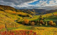 Germany_Vineyard