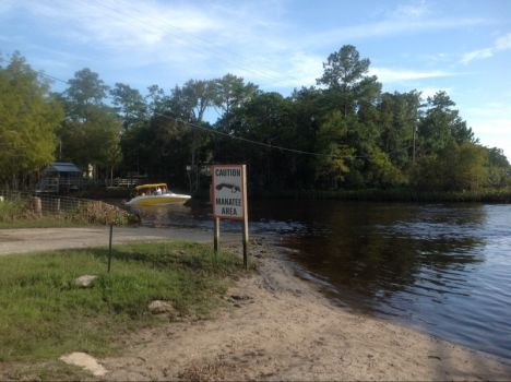 There are Many Manatees in the Wakulla River !