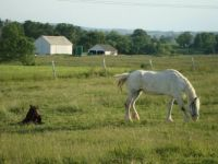Ohio Mare and Foal