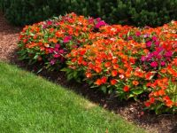 A Pretty Flower Bed
