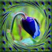 Digital Blue Poppy