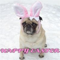 Cute-Pug-Easter-Bunny