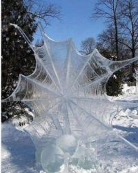 Winter webs