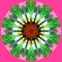 Floral Kaleido 🌞