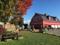 podzim na farmě