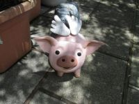 flying piggy