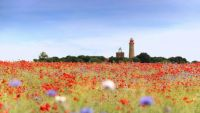 Lighthouse Adorned by Poppies