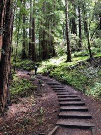 A Path in Muir Woods, California