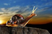 Sunset Snails (Easy)