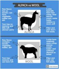 Alpaca vs Wool