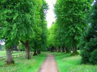 The Lime Avenue at Nymans